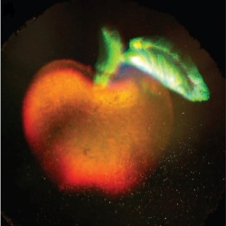 A 3D full color hologram of an apple. The image shown here is a photograph of a hologram that records the three dimensional structure of an apple and leaf in full color. This frame is part of a video that demonstrates how changing the viewer�s perspective of the hologram alters its appearance, as would happen when viewing the original object.