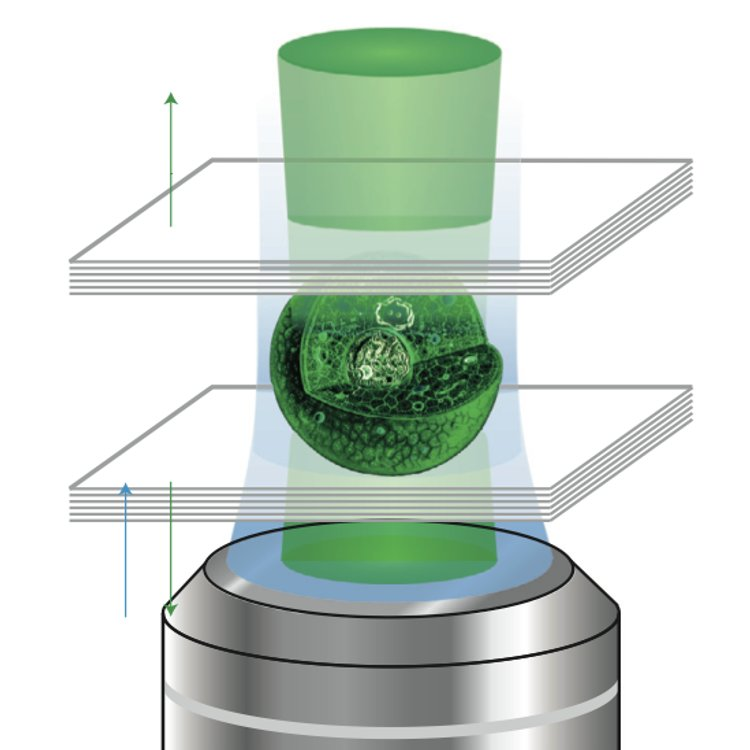 A lasing cell. Certain fluorescent protein producing cells can be made to emit laser light if placed inside an appropriate optical cavity. Malte Gather and Seok Hyun Yun have obtained a green laser by placing a GFP-producing mammalian cell between two highly reflective Bragg mirrors.